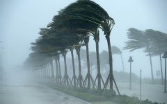 Hurricane Irma devastates south Florida