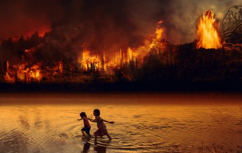 Rainforest fires have increased more than 20% in recent years.