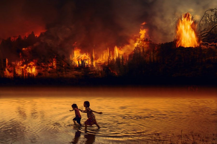 Amazon rainforests in ruin