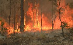 Australia Struggles to Quell Wildfires