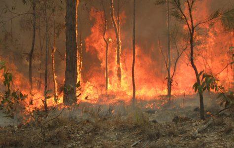 Australia fires consumes land at Captain Creek central Queensland Australia.