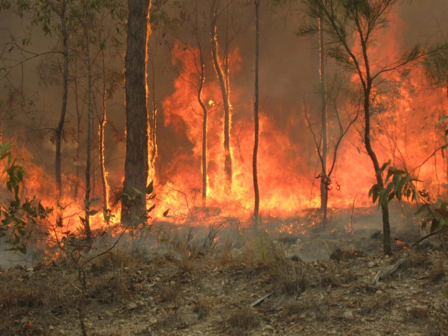 Australia fires consumes land at Captain Creek central Queensland Australia.
