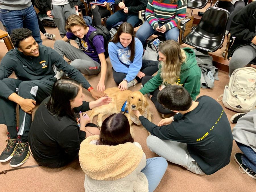 AP Psychology students visit with comfort dogs in Room 200.
